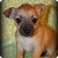 Adopt A Pet :: Pearl - Lodi, CA