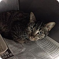 Adopt A Pet :: Briar - Lancaster, VA