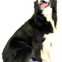 Adopt A Pet :: Sparky - Inverness, FL
