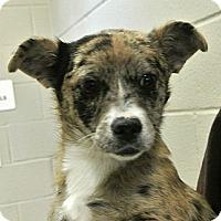 Adopt A Pet :: Winnie - white settlment, TX