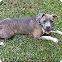 Adopt A Pet :: Roman - Mocksville, NC