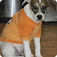 Adopt A Pet :: Rango - Vidor, TX