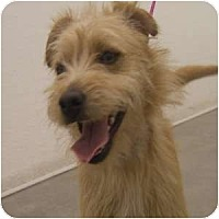 Adopt A Pet :: Cruz - Phoenix, AZ