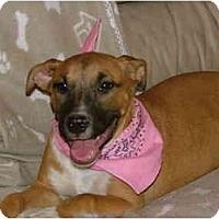 Adopt A Pet :: Rosie - Glastonbury, CT
