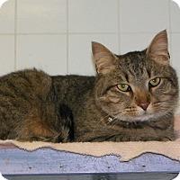 Adopt A Pet :: Sam - Dover, OH