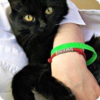 Adopt A Pet :: Esmeralda - Toledo, OH