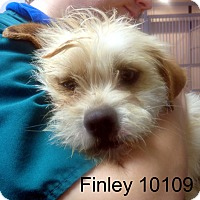 Adopt A Pet :: Finley - baltimore, MD