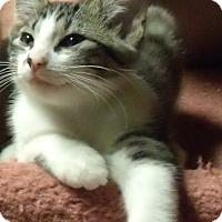 Adopt A Pet :: WHITNEY - Acme, PA