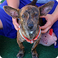 Adopt A Pet :: Murphy - Yuba City, CA