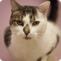 Adopt A Pet :: Lovey - Circleville, OH