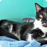 Adopt A Pet :: Inez - Fairfax, VA