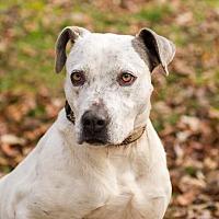 Adopt A Pet :: Grayson - Blairsville, GA
