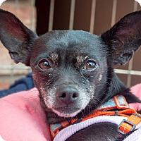 Adopt A Pet :: Roxanne - San Marcos, CA