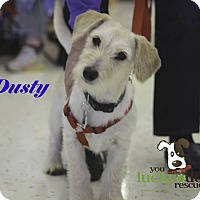 Adopt A Pet :: Dusty - Alpharetta, GA
