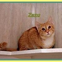 Domestic Shorthair Cat for adoption in Berkeley Springs, West Virginia - Zazu
