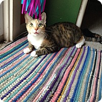 Domestic Shorthair Cat for adoption in Millersville, Maryland - Sally