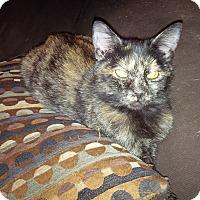 Adopt A Pet :: Kylie (Foster) - Exton, PA