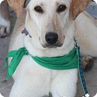 Adopt A Pet :: Macy - Washington, DC