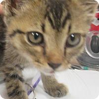 Adopt A Pet :: Tony - Decatur, AL