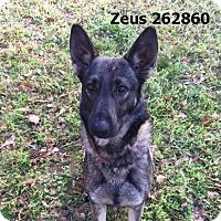 Adopt A Pet :: ZEUS - Conroe, TX