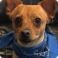 Adopt A Pet :: Cooper - Princeton, KY