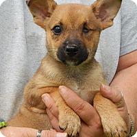 Adopt A Pet :: Juno (5 lb) Video! - SUSSEX, NJ