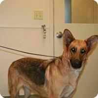 Adopt A Pet :: Sara - Wildomar, CA