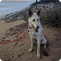 Shepherd (Unknown Type) Mix Dog for adoption in San Diego, California - Pieper