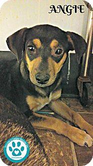 Terrier (Unknown Type, Small) Mix Dog for adoption in Kimberton, Pennsylvania - Angie