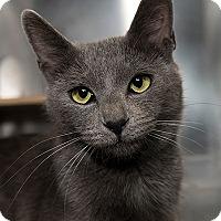 Adopt A Pet :: Jolie - San Juan Capistrano, CA
