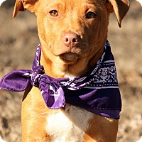 Adopt A Pet :: Delta - Haggerstown, MD