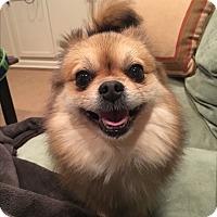Adopt A Pet :: Gigi - Memphis, TN