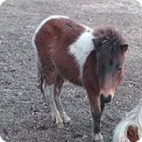 Adopt A Pet :: Merida - Loudon, TN