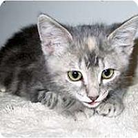 Adopt A Pet :: Lynn - Shelton, WA