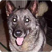 Adopt A Pet :: Max - Belleville, MI