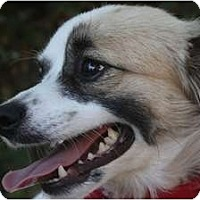 Adopt A Pet :: Buster Brown - san diego, CA