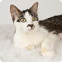 Adopt A Pet :: Hazel - Eagan, MN