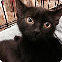 Adopt A Pet :: Potter - Los Angeles, CA