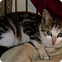 Adopt A Pet :: Pearl - brewerton, NY