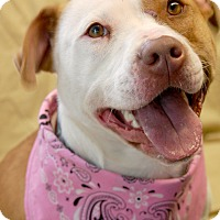 Adopt A Pet :: Molly - Long Beach, NY