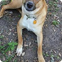 Adopt A Pet :: Coco - Norwalk, CT