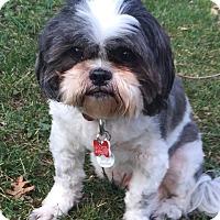 Adopt A Pet :: CHARLIE-pending - Eden Prairie, MN