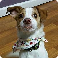 Adopt A Pet :: Winston- ADOPTED! - Lisbon, OH