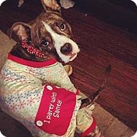 Adopt A Pet :: Kammy - Villa Park, IL