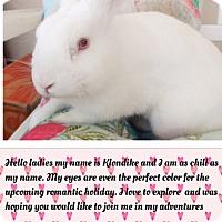 Adopt A Pet :: Klondike - Hillside, NJ
