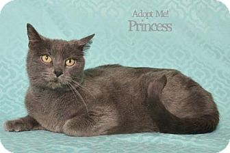 Domestic Shorthair Cat for adoption in West Des Moines, Iowa - Pryncess