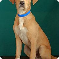 Adopt A Pet :: Dean- ADOPTION PENDING - Waldorf, MD