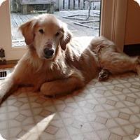 Adopt A Pet :: Chase - Wilmington, DE