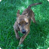 Adopt A Pet :: Daisy J. - Seattle, WA