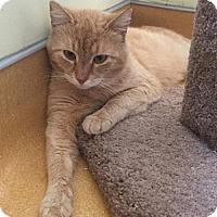 Adopt A Pet :: Pablo - Hudson, NY